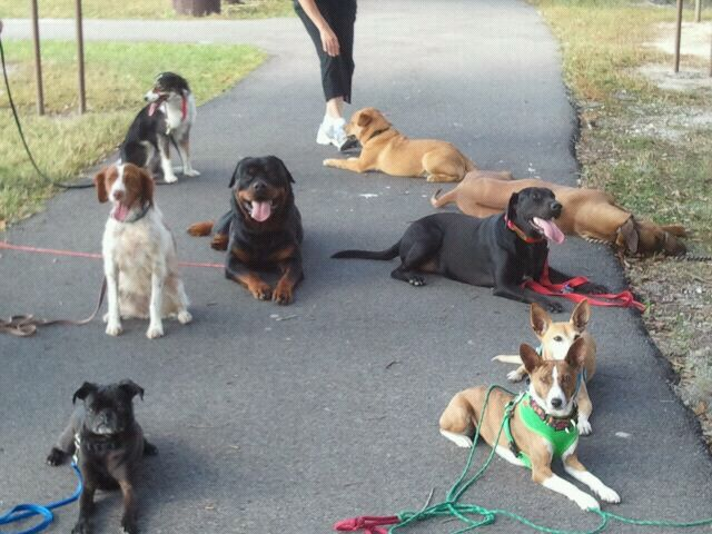 Sit And Stay Dog Training Tampa