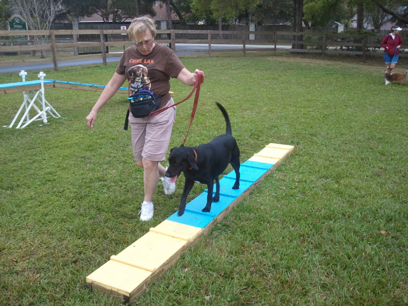 Dog Obedience Training Tampa Fl