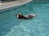 poolmanners